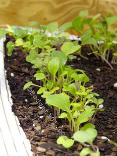 Weed Free Bag Garden [Great to start seeds and quite portable, too. Container Gardening, Gardening Tips, Vegetable Gardening, Home Grown Vegetables, Victory Garden, Grow Bags, Fruit Plants, Small Space Gardening, Permaculture