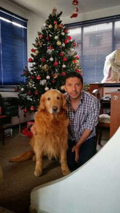 Chester, Christmas Tree, Holiday Decor, Home Decor, Pictures, Teal Christmas Tree, Decoration Home, Room Decor, Xmas Trees