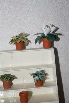 plantenkast