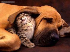 :D I know he's a blood hound, but he is still a hound <3