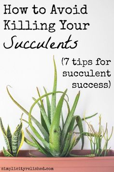 Are you always killing your indoor plants? Turns out you don't have to! Succulents are low-maintenance, not no-maintenance-- find out how to keep them alive with 7 simple tips! Read more: Plant Parenthood: How To Avoid Killing Your Succulents