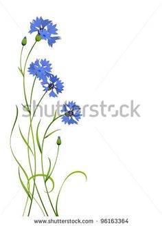 cornflower in english  fiordalisi in italiano