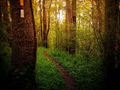 Golden hour in the forest..pure beauty