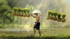 Jakkree Thampitakkul - Farmers Grow Rice in the Rainy Season - Vietnam People Around The World, Travel Around The World, Around The Worlds, Vietnam, Angkor, Laos, Rice Paddy, Voyager Loin, Destinations