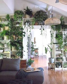 Living Room Decoration With Plants Ideas You'll Like; Living Room Decoration With Plants; Plants In Living Room; Living Room With Plants Deocr; House Plants Decor, Bedroom With Plants, Living Room With Plants, Indoor Plant Decor, Plant Wall Decor, Wall Of Plants Indoor, Living Room Decor Green, Kitchen With Plants, Plant Rooms