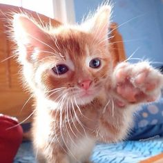 An extremely cute high five!