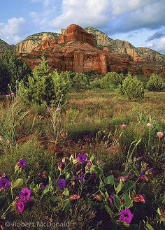 Arizona Highways Wildflowers