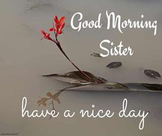 Looking for Good Morning Wishes for Sister? Start your day by sending these beautiful Images, Pictures, Quotes, Messages and Greetings to your Sis with Love. Good Morning Sister Images, Funny Good Morning Quotes, Good Morning Friends, Morning Pictures, Good Morning Wishes, Good Morning Coffee, Good Morning Gif, Good Morning Greetings, Prayers For Sister
