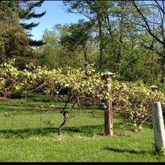 Advice on everything gardening Fence Ideas, Patio Ideas, Backyard Ideas, Garden Ideas, Fencing Companies, Metal Fence, Fence Design, Window Boxes, Go Outside