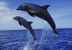 Do dolphins hold the key to a cure for diabetes?