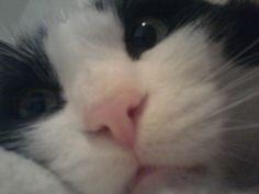 Sasouki .. cat