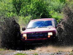 Raptor in the mud