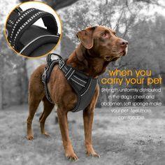 Aodoor Ultra-Soft Hundegeschirr Softgeschirr Brustgeschirr Hunde Geschirr Sicherheitsgeschirr M Schwarz: Amazon.de: Haustier