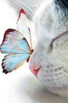 ...The tale of a Butterfly who fell in love with a cat......? ( OPC- So cute #cat www.kidsdinge.com )