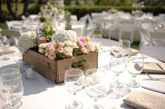 Whitney Rose Events
