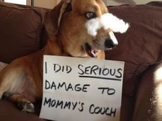 Mommy needed a new couch anyway