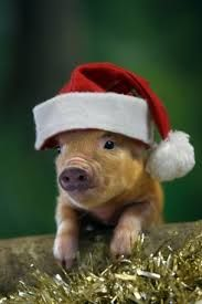 Christmas Pigs.Pin By Bonnie Mann On I Love Piglets Christmas Animals