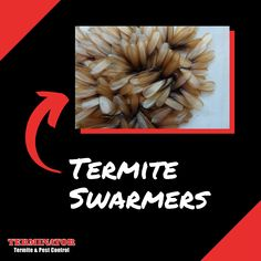Now is the time when termite swarmers are out & about! If you see insect wings on your windowsill, you probably have a termite infestation. Call Terminator to get them exterminated, or just for an inspection for peace of mind! Learn more: www.goterminator.com/services #TerminatorTPC #TermiteInfestation #Termites Termite Pest Control, Drywood Termites, The Crawl, Insect Wings, Peace, Sobriety, World