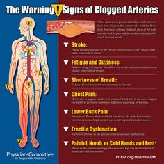 Responsible for carrying oxygen-rich blood and life-sustaining nutrients from the heart to the rest of the body, healthy arteries are essential for maintaining a healthy body.
