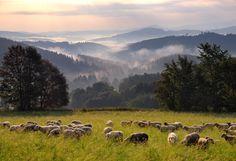 Czech Republic - Vandringsleder i Tjeckien Heart Of Europe, Green Belt, Magical Forest, Central Europe, Czech Republic, Countryside, Travel Inspiration, Explore, Adventure