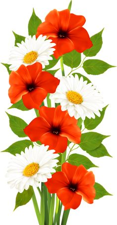 Poppies and Daisies Transparent PNG Clipart Summer Backgrounds, Flower Backgrounds, Exotic Flowers, Pretty Flowers, Flower Images, Flower Art, Rose Flower Wallpaper, Giant Flowers, Flower Clipart