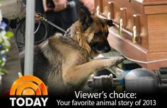 Dog mourning slain cop partner voted favorite animal story of the year - TODAY.com