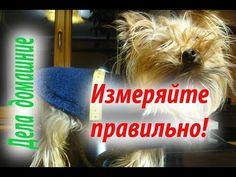 Как связать комбинезон для собаки своими руками .Часть 1 - YouTube