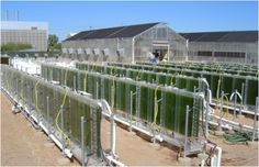 Image of a flat-plate photobioreactor array for algae cultivation