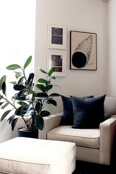 best large indoor house plants