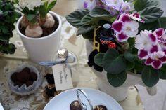 Schornsteinfeger im Tete-a-tete mit dem Usambaraveilchen.