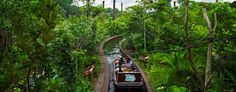Book Singapore River Safari Theme Park Adventure Tour Packages and Ticket 2016. Enjoy unforgettable adventure inspired by the world's most iconic rivers.  Read More:- http://goo.gl/0dL48Y #Singapore #SingaporeTour #SingaporeAdventure #GalaxyTourism