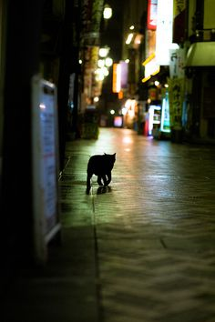 tired cat of the tired city. Japan