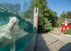 Un nouvel espace séminaires original pour le Grand Est au Parc zoologique