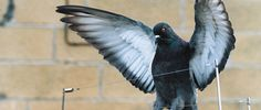 If you want to protect your home or business from unwanted pest then call our expert for pest solution bird control.