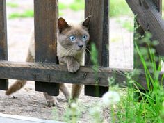 """Auch Disney hat es mit """"Simba"""" unter die beliebtesten Katzennamen geschafft    www.einfachtierisch.de"""