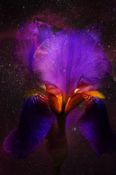 Risen From Stars. Cosmic Iris Acrylic Print by Jenny Rainbow. All acrylic prints are professionally printed, packaged, and shipped within 3 - 4 business days and delivered ready-to-hang on your wall. Choose from multiple sizes and mounting options. Art Prints For Home, Prints For Sale, Home Art, Fine Art Prints, Framed Art, Framed Prints, Purple Iris, Purple Flowers, Thing 1