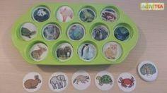 Emparejar imágenes de animales reales con pictogramas en una cubitera