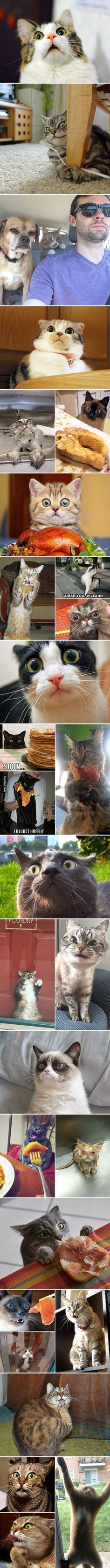 Cats are probably the most dramatic animals in the world...