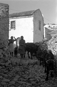 1955 ~ Crete (photo by Erich Lessing) Crete Island, Greece Islands, Crete Greece, Athens Greece, Greece Photography, Time Pictures, Paris Match, Good Old Times, Old Greek