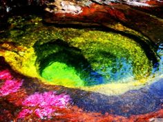 """The Caño Cristales """"river of the five colors"""". the algae produces these colors."""