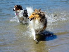Race! ©Janet Wall, at Howtoloveyourdog.com, via Flickr - Photo Sharing!