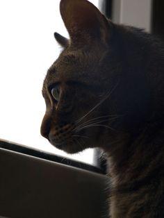 #Tom #Cat #1Year #MyBaby #Puppy #Window #CanaryIsland #Rain #LoveAnimals #LovePuppy #CatModel