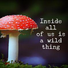 Something wild. ~ETS  #thewildnesswithin