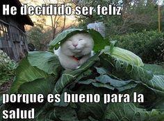 Spanish cat memes. #Gato memes
