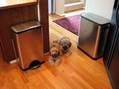 Best Dog Proof Trash Cans & Tips For Keeping Your Dog Out Of The Garbage! #dogs