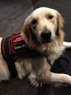 119 Best Service Dogs Images On Pinterest Psychiatric Service Dog
