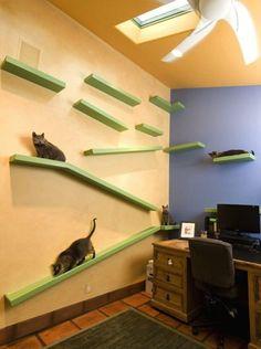 Renovated cat paradise