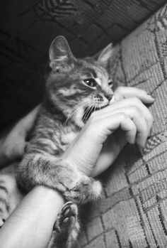 Cats lover!