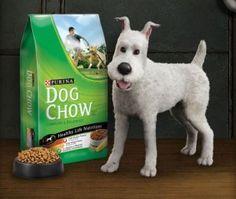 The Adventurous Dog Photo Sweepstakes