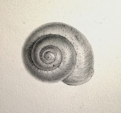 Ideas For Drawing Art Projects Pencil Life Shell Drawing, Form Drawing, Pencil Sketch Drawing, Pencil Shading, Pencil Art Drawings, Art Sketches, Drawing Art, Shading Drawing, Life Drawing